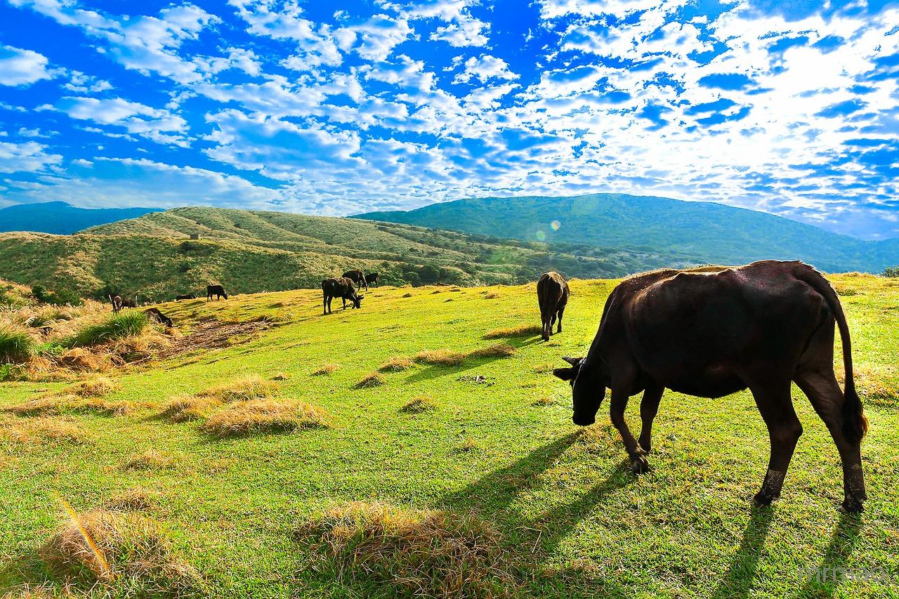 農地 牧草地
